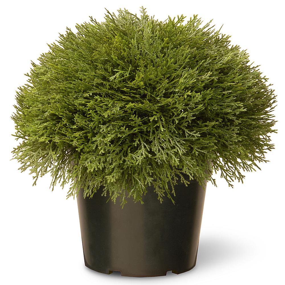 "National Christmas Tree Company Artificial 15"" Juniper Bush in Green Growers Pot"""